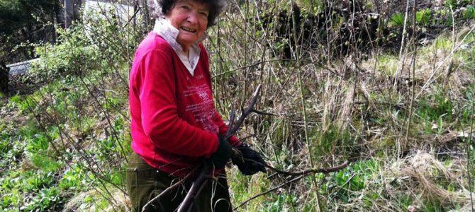 Henting av kvist- og hageavfall våren 2017